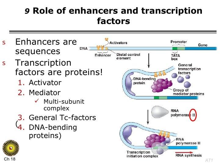 9  Role of enhancers and transcription factors <ul><li>Enhancers are DNA sequences </li></ul><ul><li>Transcription  factor...