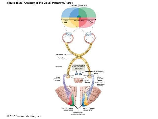 brain radiation side effects steroids