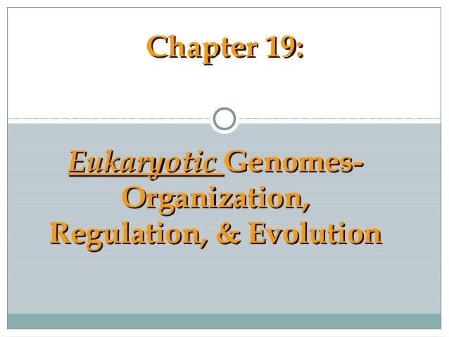 Chapter 19:Chapter 19: EukaryoticEukaryotic Genomes-Genomes- Organization,Organization, Regulation, & EvolutionRegulation,...