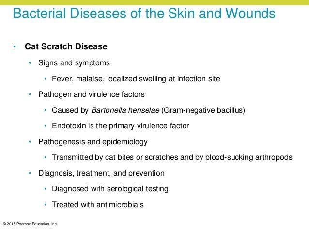 What Pathogen Causes Cat Scratch Disease
