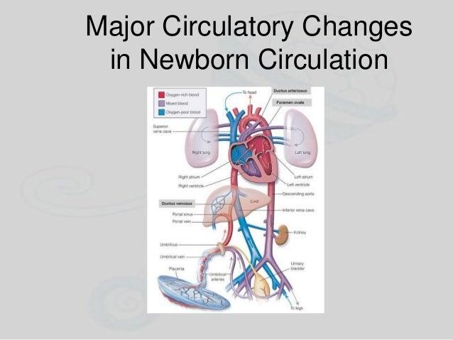 Major Circulatory Changes in Newborn Circulation