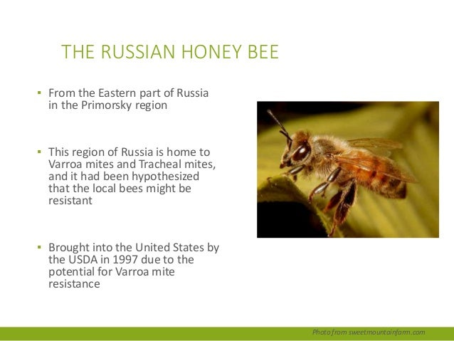 Ch 1 The Place of the Honey Bee in the World by Dr ... - photo#45
