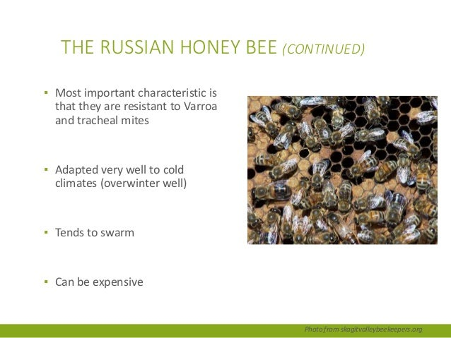 Ch 1 The Place of the Honey Bee in the World by Dr ... - photo#49