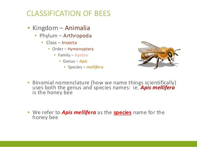 Ch 1 The Place of the Honey Bee in the World by Dr ...