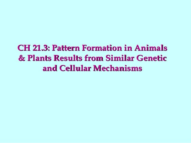 CH 21.3: Pattern Formation in AnimalsCH 21.3: Pattern Formation in Animals & Plants Results from Similar Genetic& Plants R...