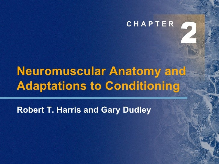 2 C H A P T E R Neuromuscular Anatomy and Adaptations to Conditioning Robert T. Harris and Gary Dudley