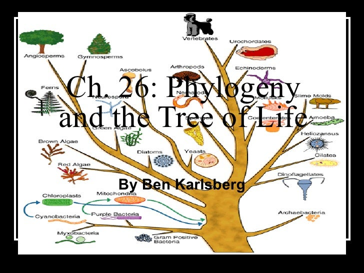 Ch. 26: Phylogeny and the Tree of Life By Ben Karlsberg