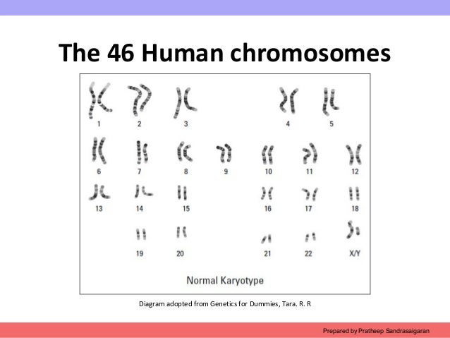 Ch2 Chromosome Structure