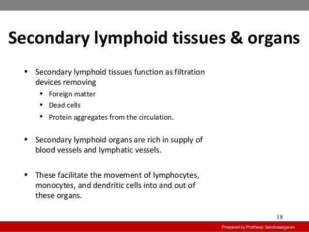 secondary lymphoid tissues Secondary lymphoid organs lymph nodes bean-shaped, encapsulated structures distributed throughout the body along the course of lymphatic vessel they are made up of mostly b-cells, t-cells, macrophages and dendritic cellsfunction:they act as immunologic filters and drain the lymph from most of the body tissues and filter out the antigens.