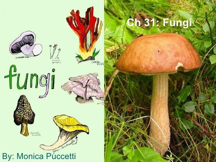 Ch 31: Fungi By: Monica Puccetti