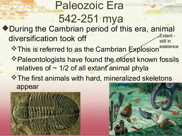 an introduction to the cambrian explosion Introduction to animal diversity  the evolutionary history of the animal kingdom pre-cambrian animal life  the cambrian explosion may have been a result of .