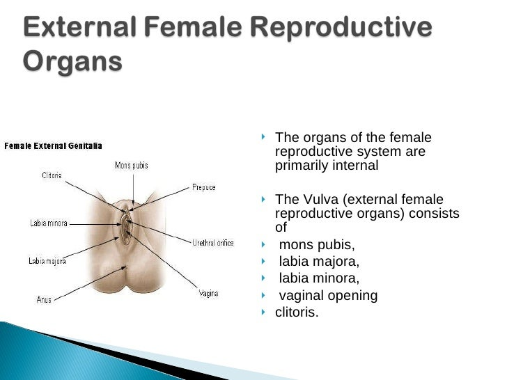 Ch3 L1 2 Male Female Reproductive Systems 3 2 Use