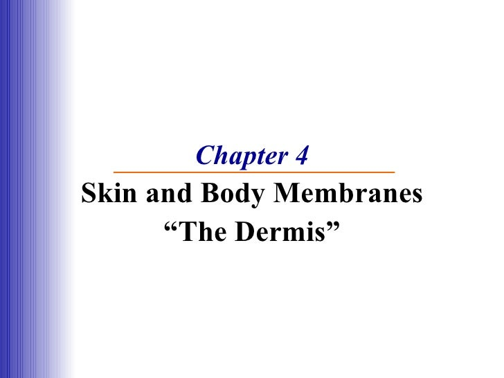 """Chapter 4 Skin and Body Membranes """"The Dermis"""""""