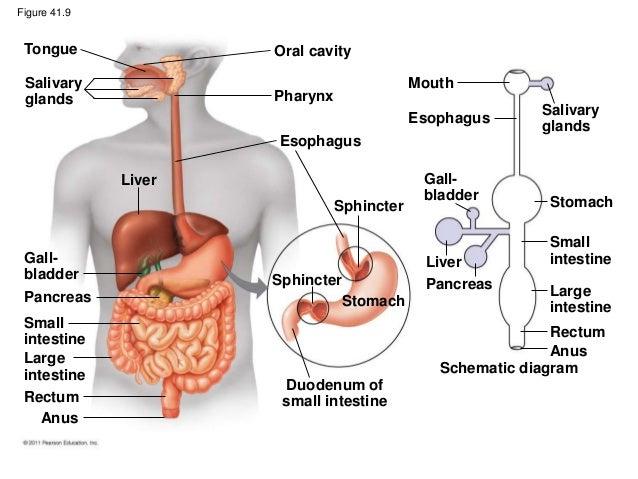 Biology (b) _ Ch41