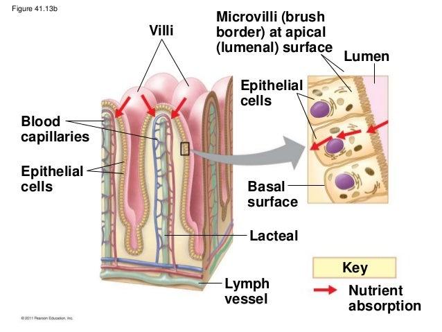 Biology B Ch41
