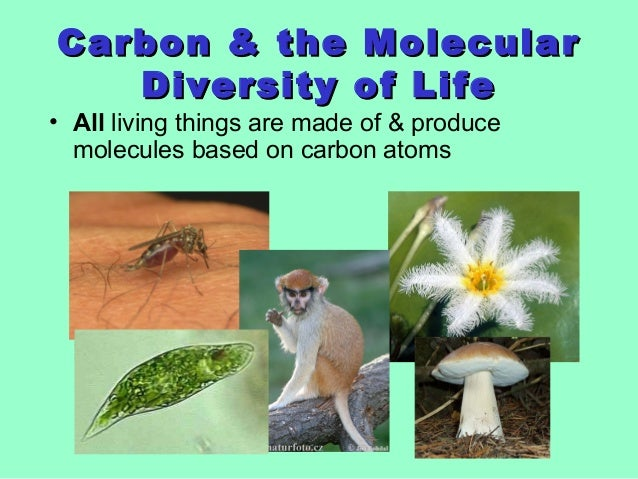 Carbon & the MolecularCarbon & the Molecular Diversity of LifeDiversity of Life • All living things are made of & produce ...