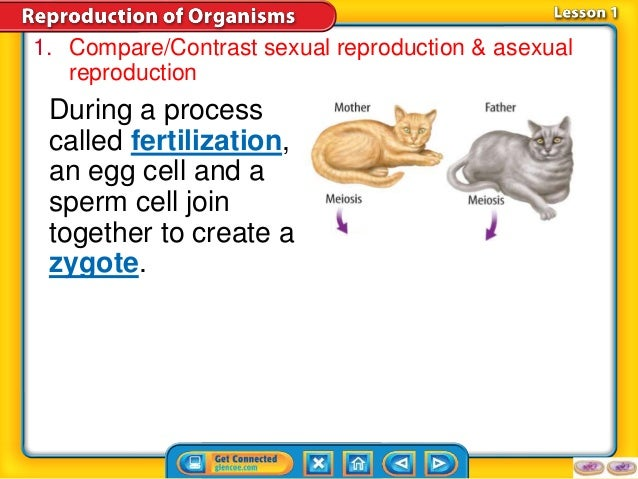 How do asexual and sexual reproduction compare the market