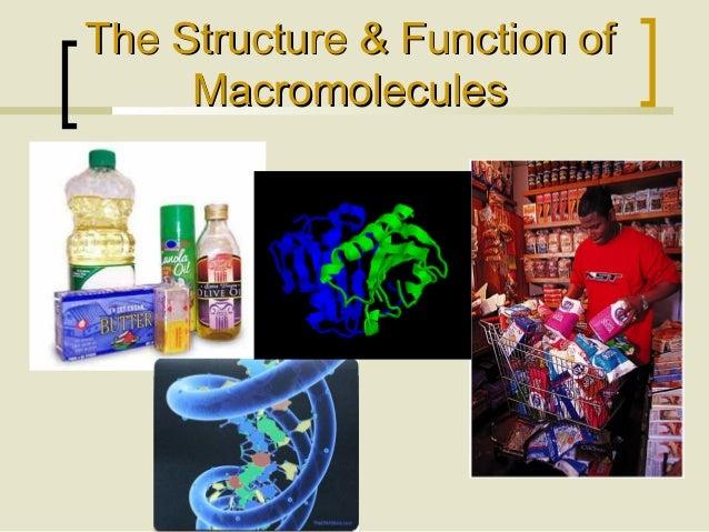 The Structure & Function ofThe Structure & Function of MacromoleculesMacromolecules