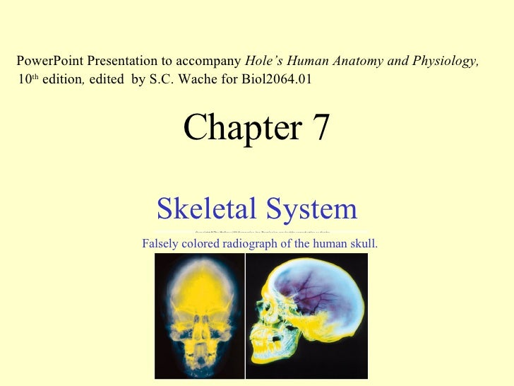 Chapter 7 Skeletal System PowerPoint Presentation to accompany  Hole's Human Anatomy and Physiology,  10 th  edition ,  ed...