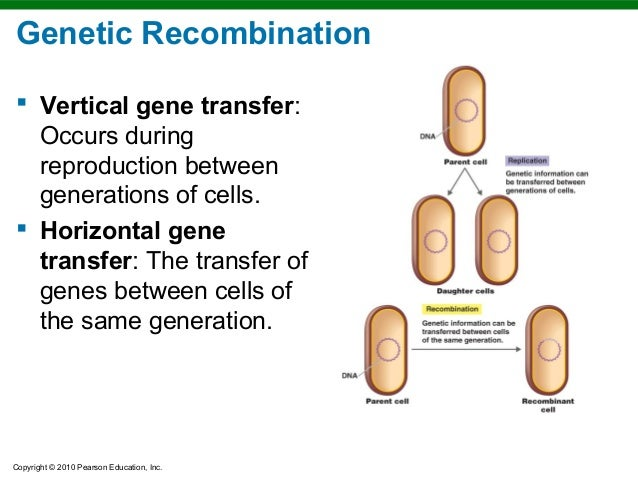 Horizontal vs vertical gene transfer