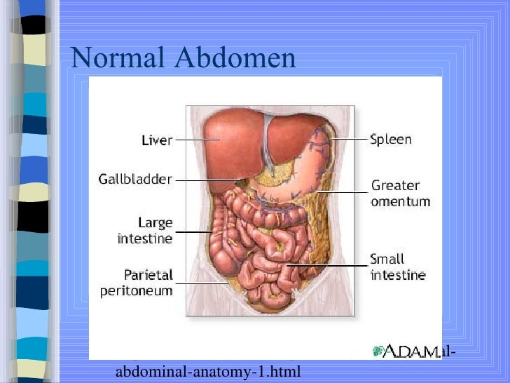 Thorax And Abdomen Information