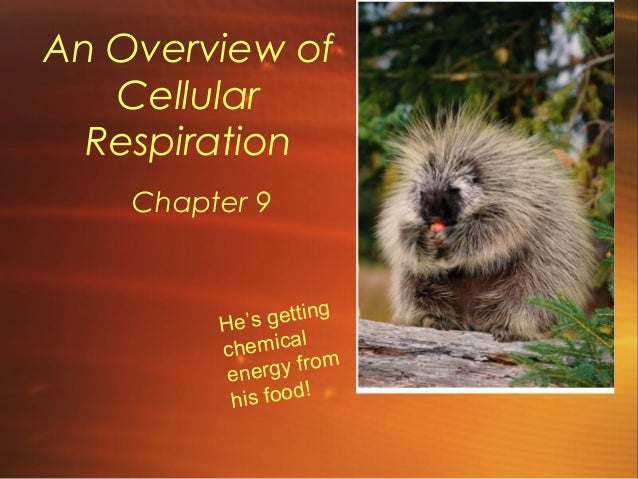 An Overview of Cellular Respiration Chapter 9  g 's gettin He l chemica m f ro energy is food! h