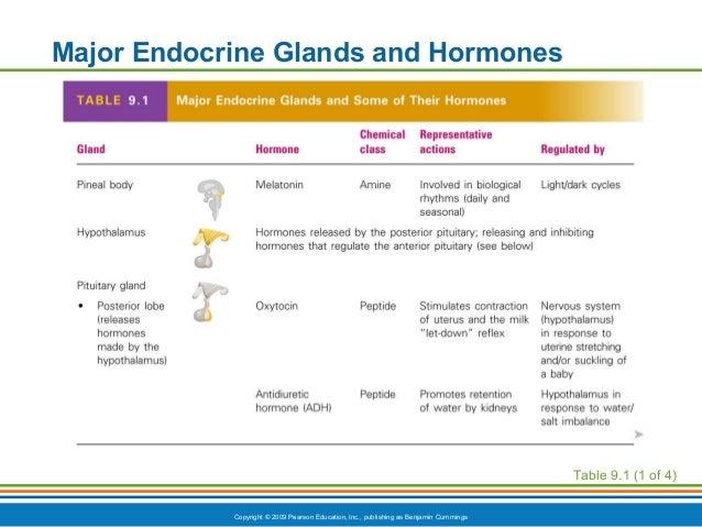 Ch9appt endocrine system