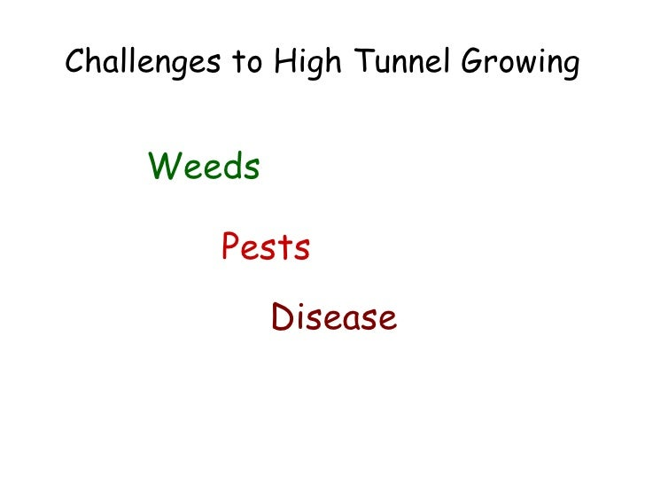 Challenges to High Tunnel Growing <ul><li>Weeds </li></ul>Pests Disease