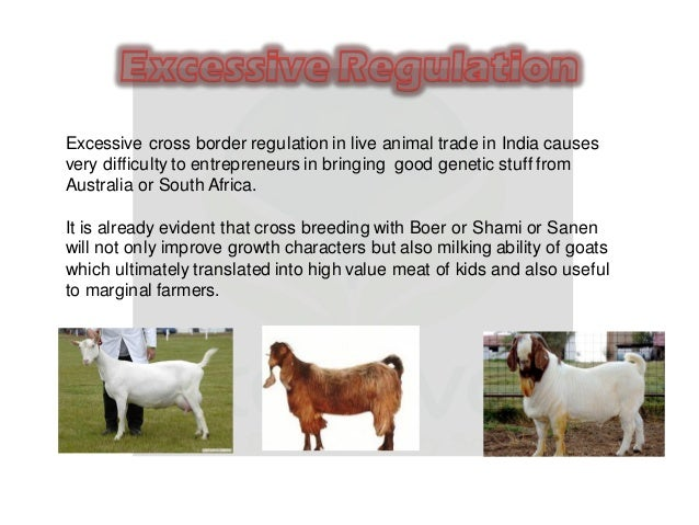 Challenges in goat farming in india - Goat Farming Consultancy