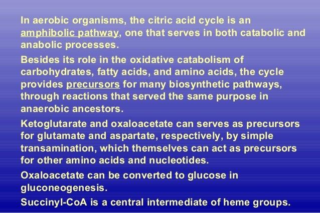 Citric Acid Cycle-Anaplerosis Slide 3