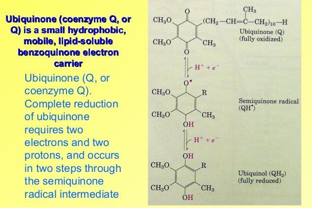 Ubiquinone (coenzyme Q, orUbiquinone (coenzyme Q, or Q) is a small hydrophobic,Q) is a small hydrophobic, mobile, lipid-so...