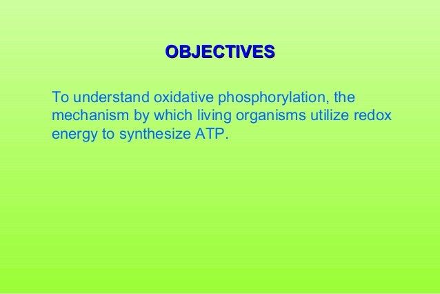 Oxidative Phosphorylation Slide 2
