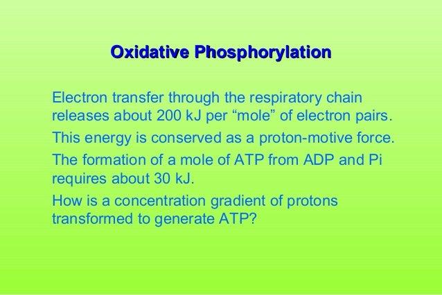 Oxidative Phosphorylation Slide 3