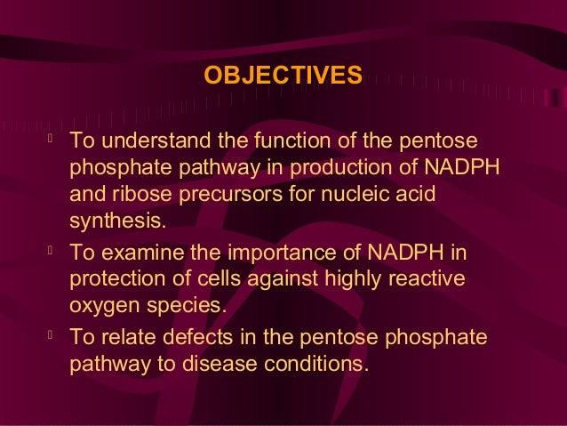 Pentose Phosphate Pathway (Hexose Monophosphate Shunt) Slide 2
