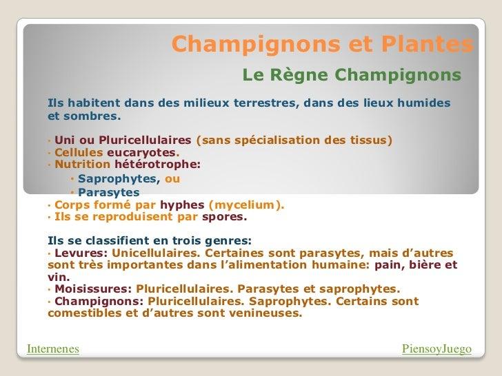 Champignons et Plantes                                   Le Règne Champignons   Ils habitent dans des milieux terrestres, ...