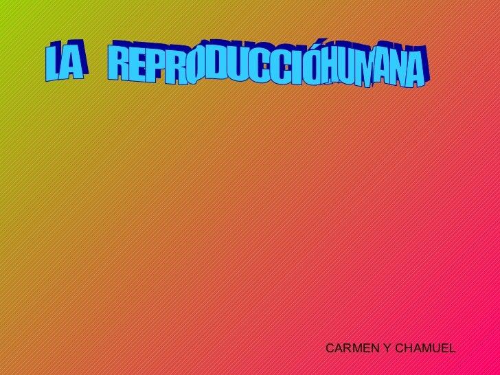 LA  REPRODUCCIÓN  HUMANA CARMEN Y CHAMUEL