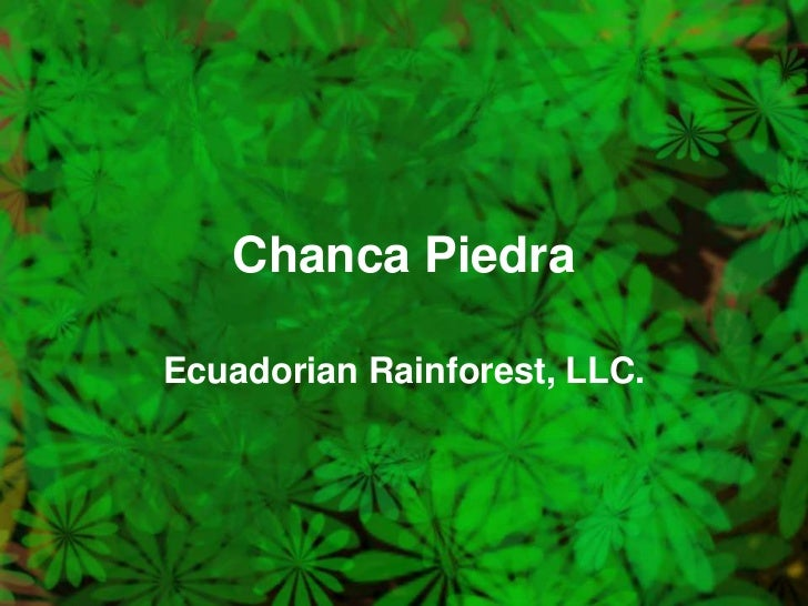 Chanca Piedra<br />Ecuadorian Rainforest, LLC.<br />