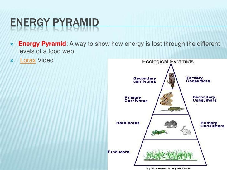 ecology power point