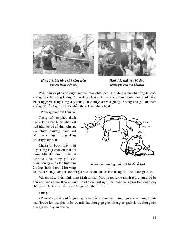 11 Hình 1.4. C t hình s 8 s ng trâu vào c t ho c g c cây Hình 1.5. Gi trâu bò đ c trong giá b n tr đ thi n Ph n đ u và ph ...