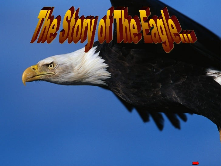 <ul>The Story of The Eagle… </ul>