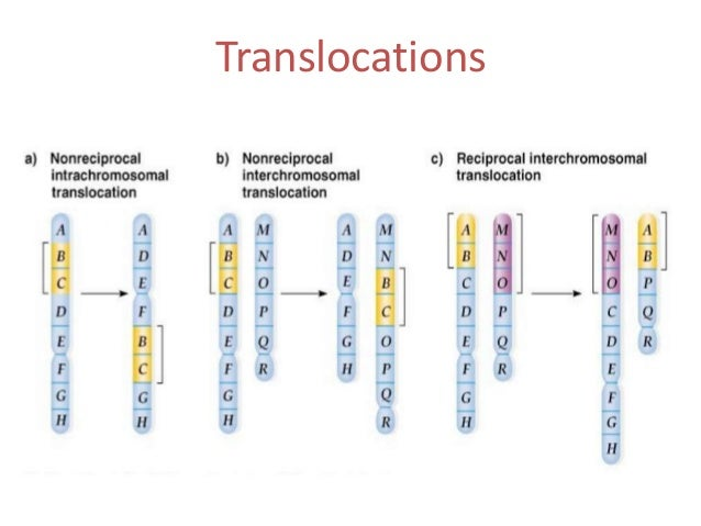 638 x 479 jpeg 45kBTranslocation