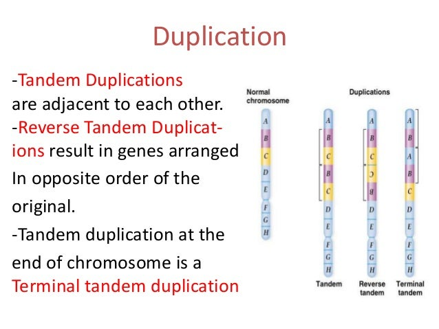 Change in chromosome structure for Syndrome miroir