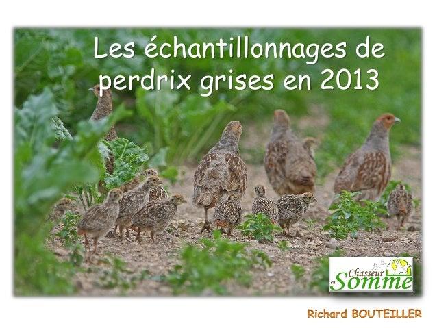 Les échantillonnages de perdrix grises en 2013