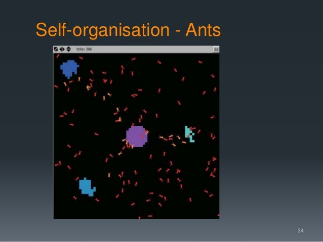 Self-organisation - Ants 34