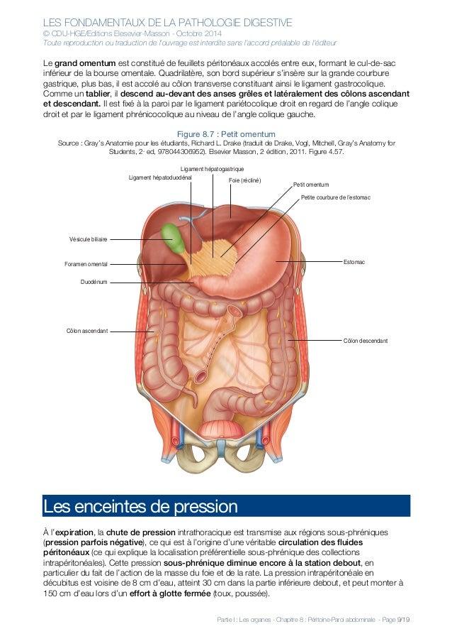 Nett Totale Abdominale Hysterektomie Anatomie Bilder - Menschliche ...