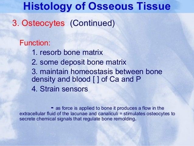 Chap07 Bone Tissue