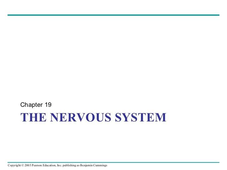 THE NERVOUS SYSTEM <ul><li>Chapter 19 </li></ul>
