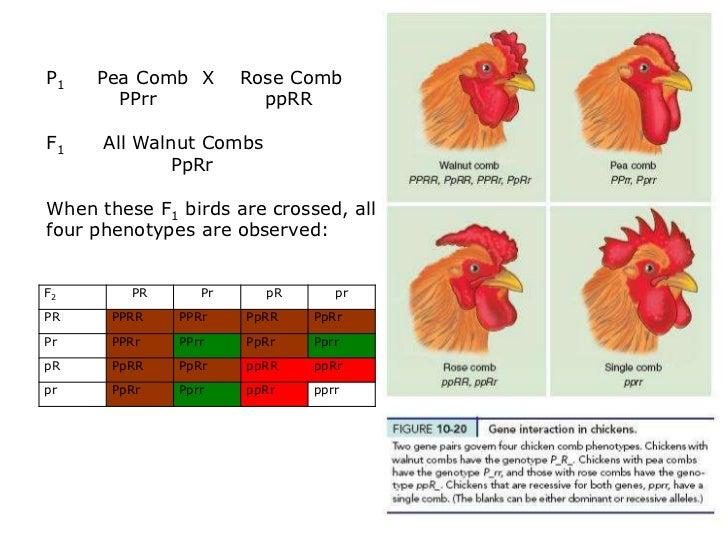 Polygenic Traits Examples In Animals Nornasfo