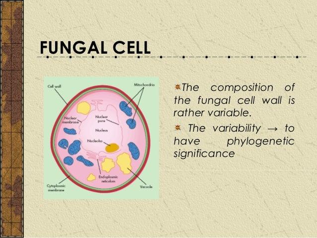 chap 2 fungal cell rh slideshare net fungi cell diagram gcse