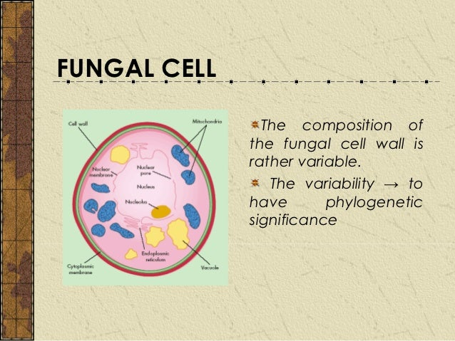 chap 2 fungal cell plant cell diagram and animal cell diagram fungal cell diagram